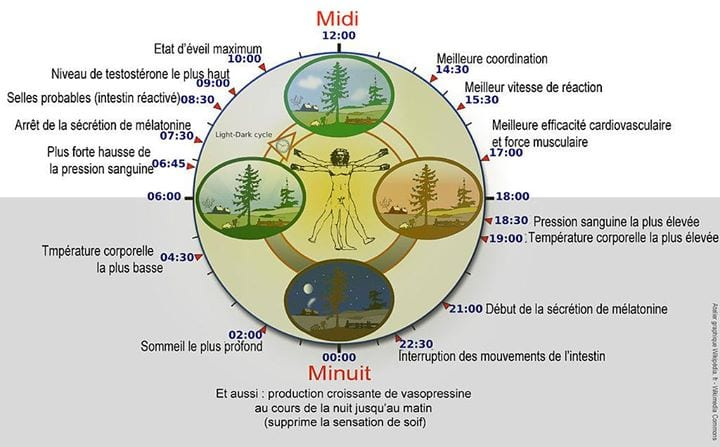 Diagramme illustrant l'expression du rythme circadien et du rythme biologique chez l'Homme [ source : http://fr.wikipedia.org/wiki/Chronobiologie ]. Ce cycle est gravement compromis par un travail de nuit régulier.